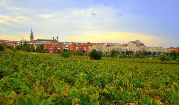 vilafranca del penedes vinyes de bon mat143182